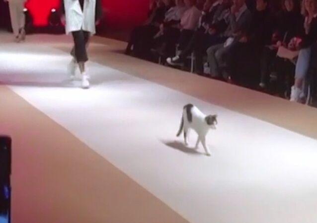Podyumun tozunu attıran kedi, defileye damga vurdu