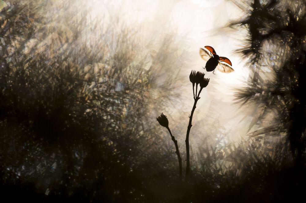Nature Photographer of The Year kazananları