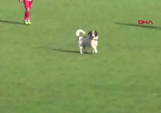 Bartın'da bölgesel amatör lig maçında sahaya giren bir köpek nedeniyle maç bir süre durdu.
