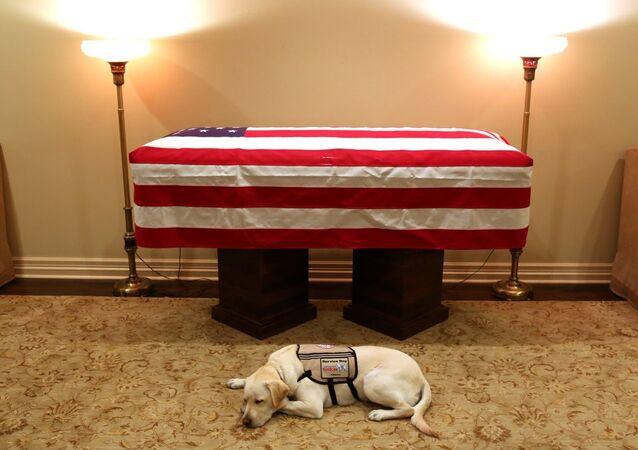 Rehber köpek Sully, George HW Bush'un tabutu başında