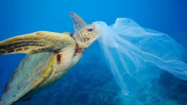 denize atılan plastik torbayı yiyen su kaplumbağası - Sputnik Türkiye