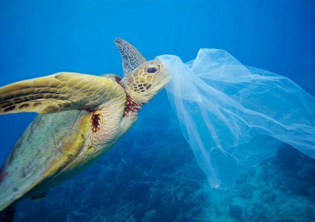 denize atılan plastik torbayı yiyen su kaplumbağası