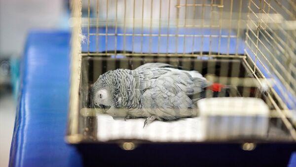 Murat Özdemir'in işkence ettiği papağan - Sputnik Türkiye