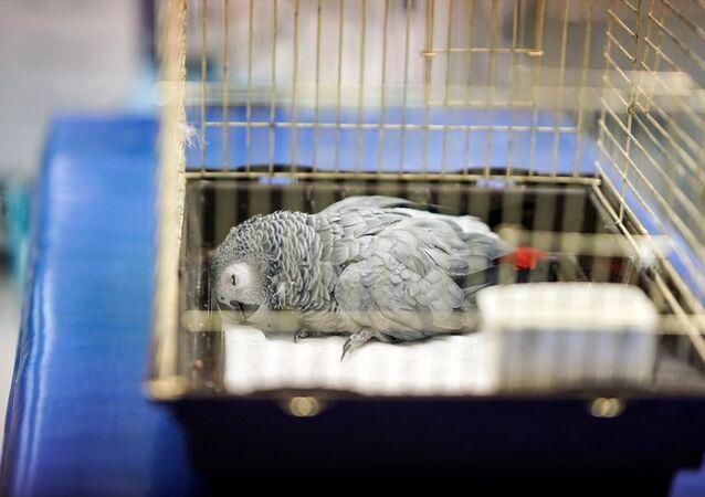 Murat Özdemir'in işkence ettiği papağan