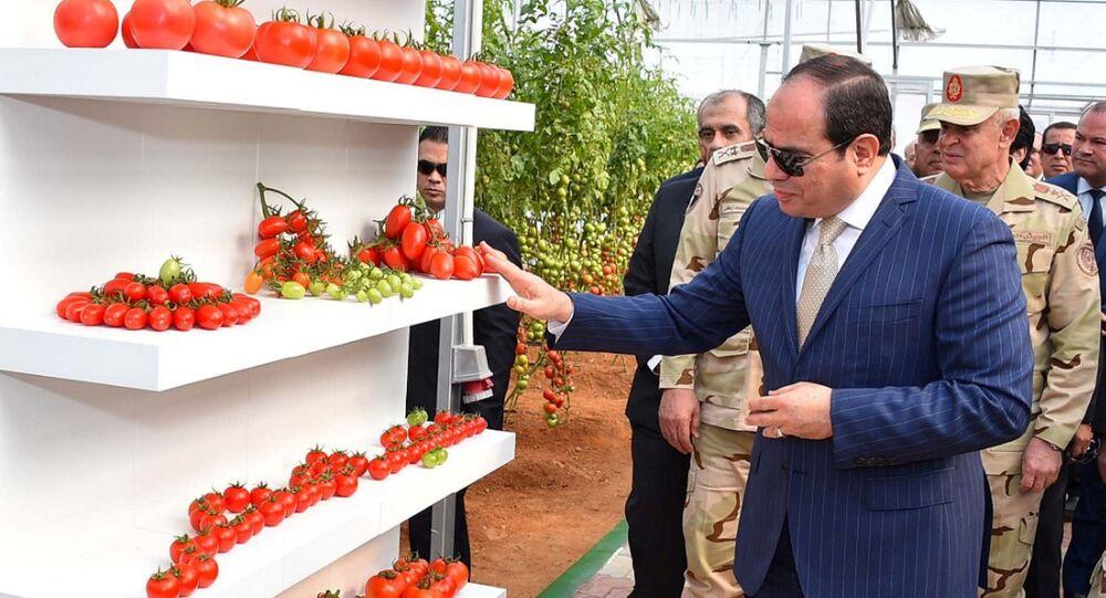 Mısır çapında 400 bin dönüm araziyi seraya dönüştürme projesi başlatan Sisi, bu kapsamda ordunun Kahire'nin kuzeydoğusundaki 10 Ramazan Şehri'nde yer alan bir tarım projesinin açılış törenine katıldı.