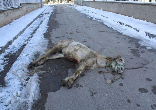 Ölüme terk edilen yaralı at