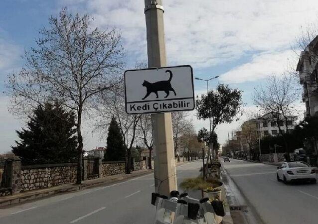 'Kedi Çıkabilir' yazan uyarı levhaları
