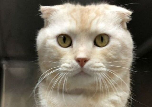 Tayvan'da kedisini kargoyla barınağa yollayan kişiye 90 bin dolar ceza