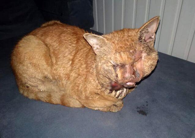 Antalya'da kediye işkence: Naylonu eritip gözlerine damlattılar
