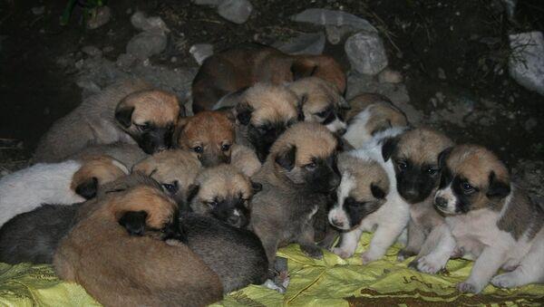 22 köpek yavrusu - Sputnik Türkiye