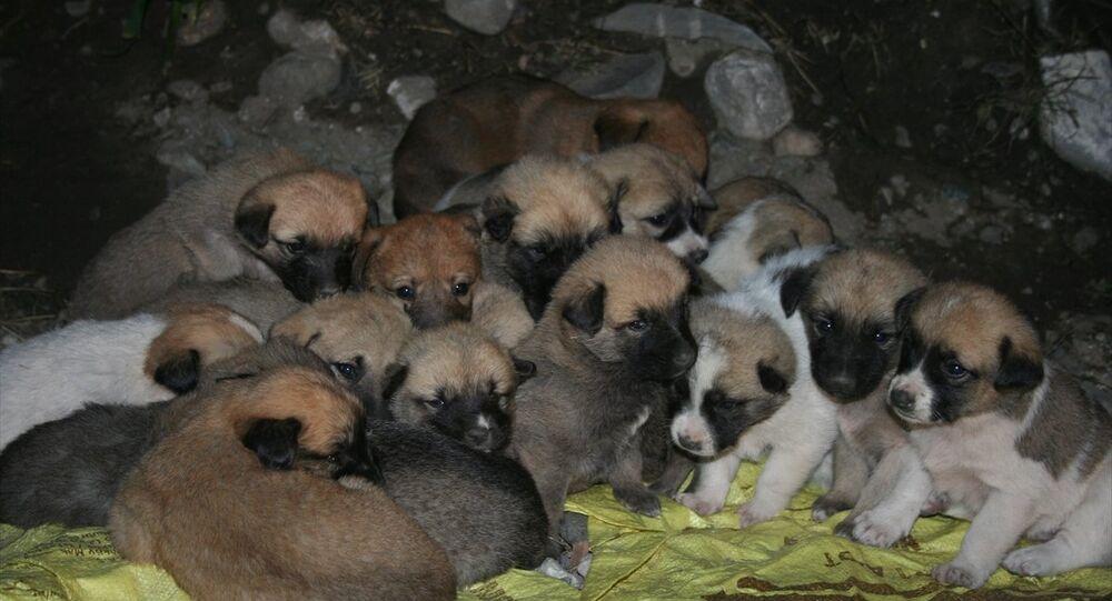 22 köpek yavrusu