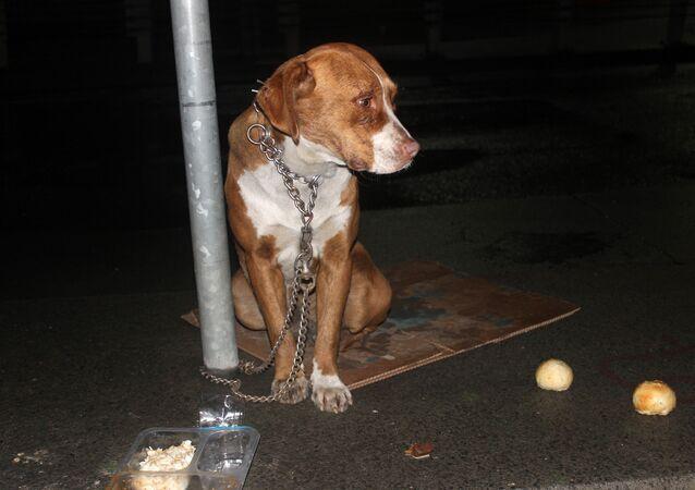 Şişli'de bir köpeği trafik tabelasına zincirleyip terk ettiler