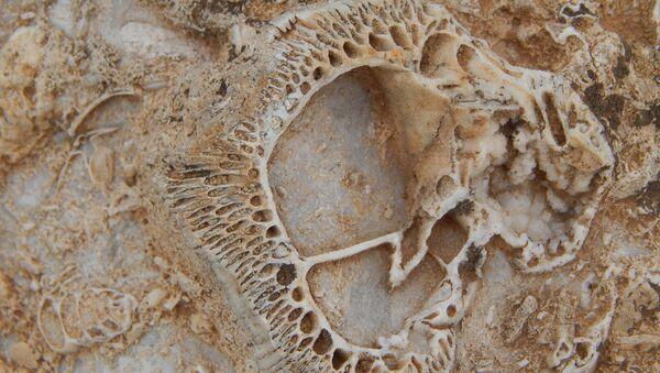 Doğa yürüyüşünde 98 milyon yıllık fosil yatağı buldu - Sputnik Türkiye