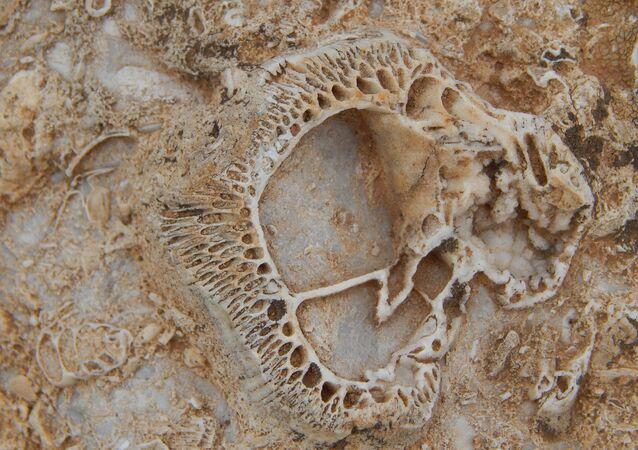 Doğa yürüyüşünde 98 milyon yıllık fosil yatağı buldu