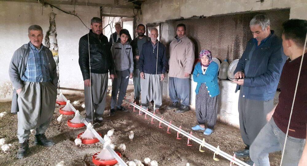 Tavuk firması iflas edince iki milyon civciv ölüme terk edildi