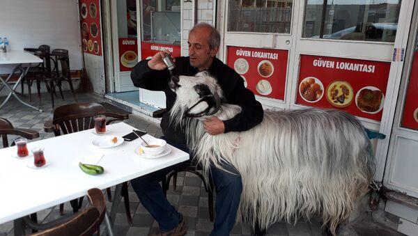'Burada keçimle beraber kahvaltı ediyorduk, köpek bir anda saldırdı' - Sputnik Türkiye