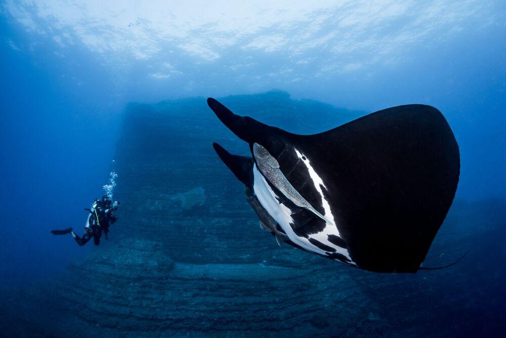 2018 Okyanus Sanatı Sualtı Fotoğraf Yarışması'nın kazananları