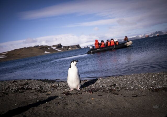 Penguen -  Antarktika
