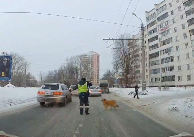 Bir polisin yardımıyla karşıya geçen köpeğin hikayesine kalp ısıtan devam: Aşk peşindeymiş