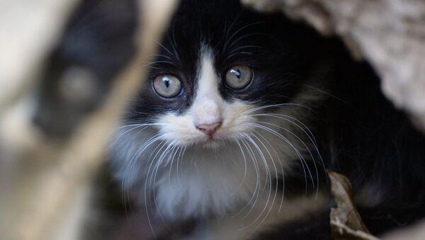 Leningrad'ı istiladan kurtaran kedilerin hikayesi - Sputnik Türkiye