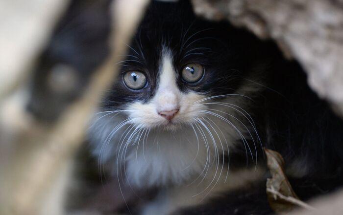 Leningrad'ı istiladan kurtaran kedilerin hikayesi