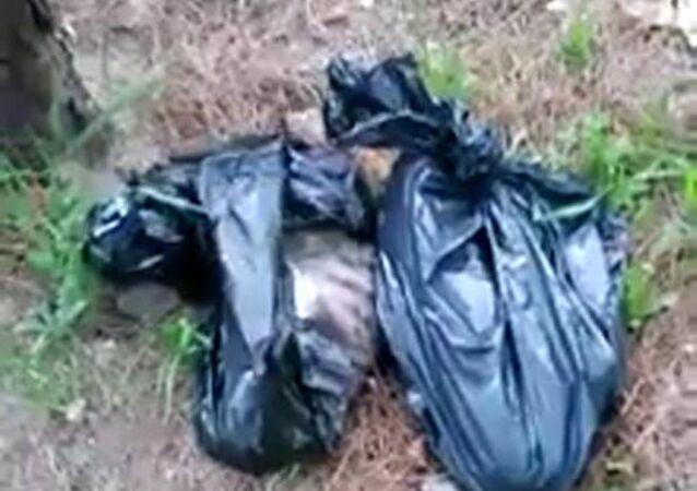 Denizli'nin Merkezefendi ilçesinde, ormanlık alana atılmış 4 ayrı çöp poşeti içinde toplam 6 kedi ölüsü bulundu.