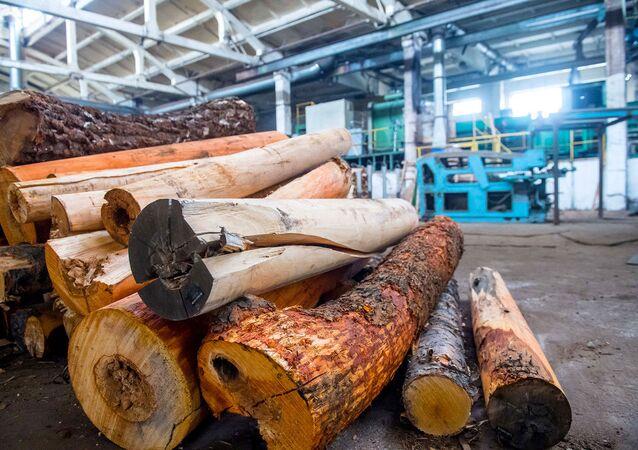 Ukraynalılar doğalgaz zamları yüzünden oduna dönüş yaptı