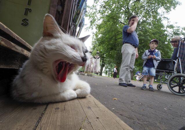 Rusya'nın başkenti Moskova'dan kedi manzaraları
