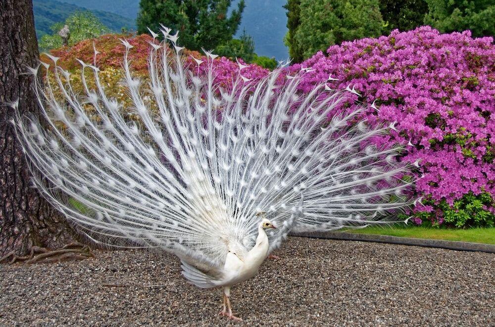 Dünyanın en ilginç kuşları