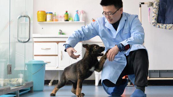 Çin'de klonlanan ilk polis köpeği eğitimlere başladı - Sputnik Türkiye