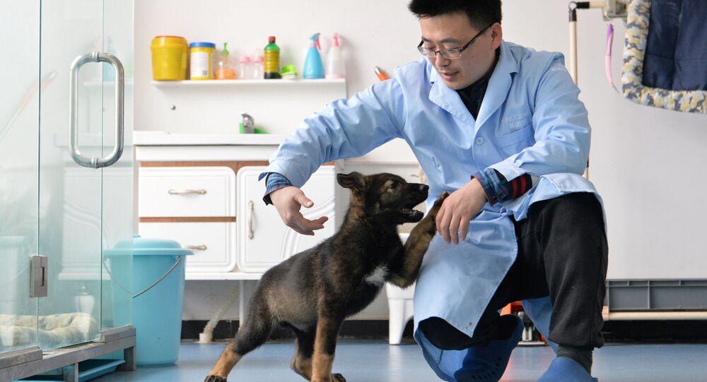 Çin'de klonlanan ilk polis köpeği eğitimlere başladı