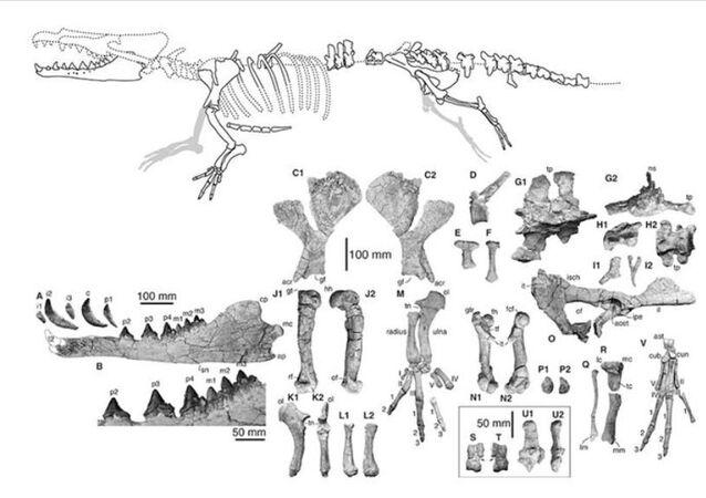 Peru'da 4 bacaklı balina fosili keşfedildi