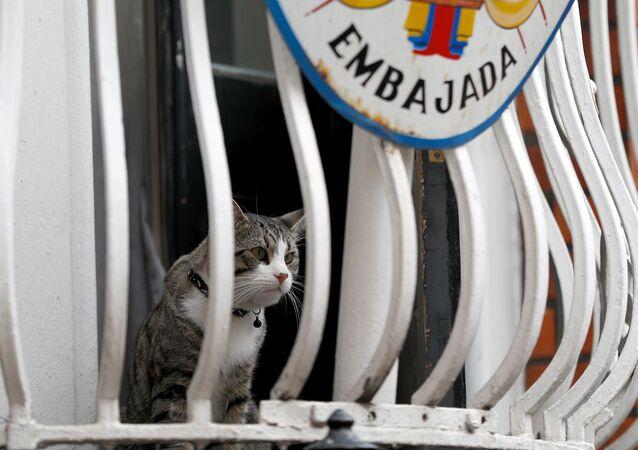 Julian Assange'ın kedisi