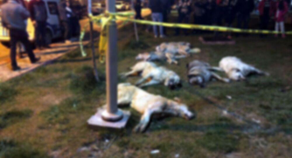 Ankara - Batıkent - Zehirlenen köpekler