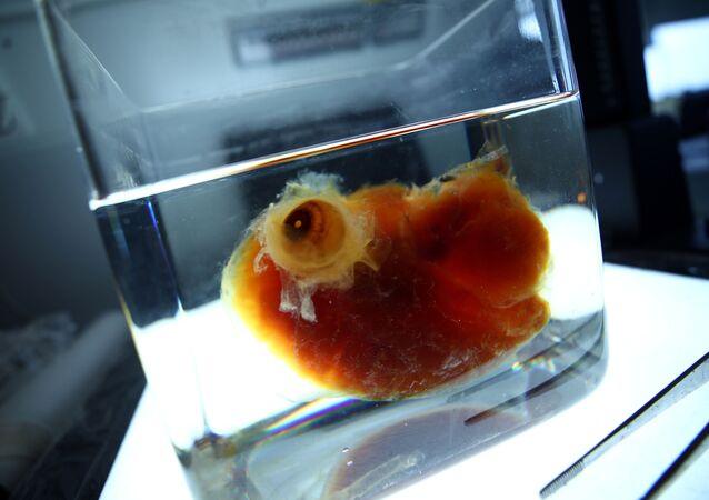 Bilim insanları  üç boyutlu yazıcıya transparan organ üretti