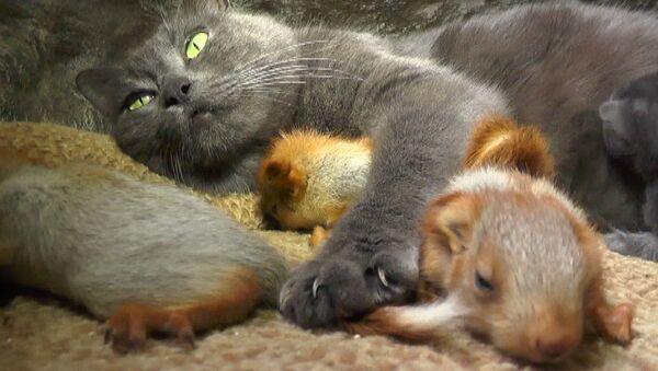 Kırım'da anne kedi yavru sincapları sahiplendi - Sputnik Türkiye