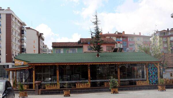 Evleri yıktıran Turgut, daha sonra betondan inşa edeceği kafeyi çam ağacı için ahşaptan yapmaya karar verdi.  - Sputnik Türkiye