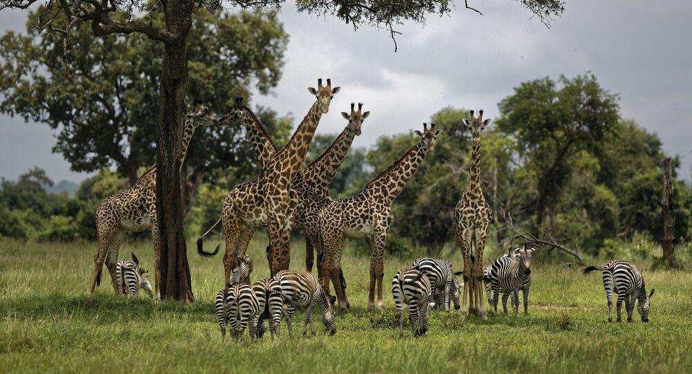 1 milyon hayvan ve bitki türü insanlar yüzünden yok olma tehlikesi ile karşı karşıya