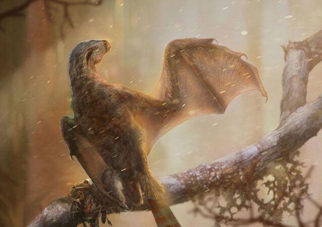 Yarasa kanatlı yeni bir dinozor türü keşfedildi