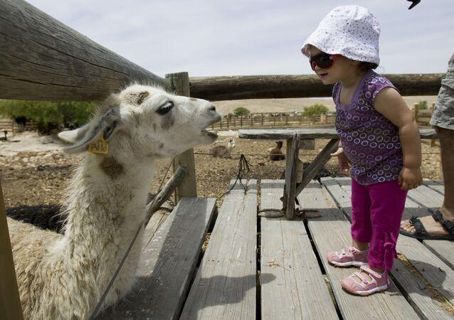 İsrail'de egzotik alpaka ve lama sürüsüne ev sahipliği yapan benzersiz Alpaca Farm'da hayvan besleme ve yerel fabrikada yün üretim atölyesi gibi pek çok etkinlik düzenleniyor. Tüm konaklama birimlerinde özel mini mutfak ve ön tarafta hamaklı bir teras mevcut.