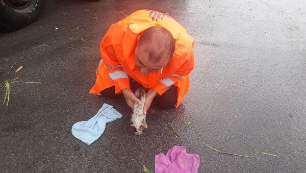 Sel sularına kapılan yavru kedi, belediye işçisinin suni teneffüsüyle hayata döndü - Sputnik Türkiye