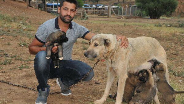 Köpek yavrularını sel sularından kurtardı - Sputnik Türkiye