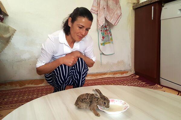 Yılandan kurtardığı tavşana bebeği gibi bakıyor - Sputnik Türkiye