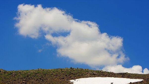 Hınıs'ın Mutluca Köyü'ne bağlı yaylada kar üstünde bekleyen bir sığır - Sputnik Türkiye