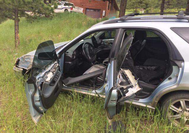 ABD'de bir ayı, araba 'kaçırıp' kaza yaptı