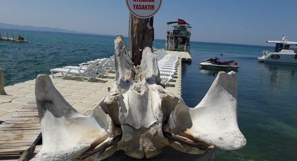 Edirne'nin Saros Körfezi'ne kıyısı bulunan Keşan ilçesine bağlı Yayla köyü sahilinde kıyıya vurmuş balinaya ait olduğu değerlendirilen kemikler bulundu.