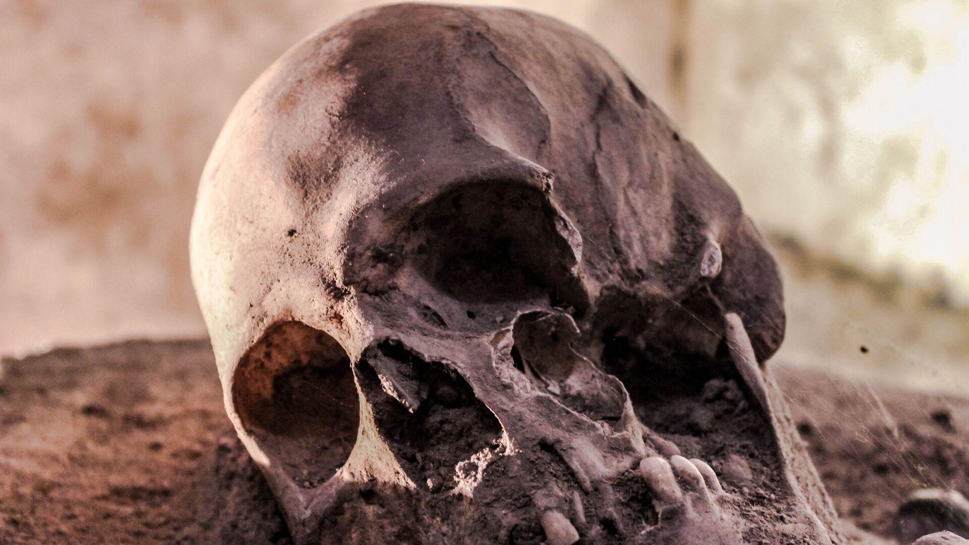 Homo sapiens, fosil - Sputnik Türkiye, 1920, 15.09.2021
