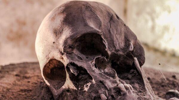 Homo sapiens, fosil - Sputnik Türkiye
