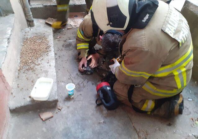 Yangında dumandan etkilenen kedi kalp masajıyla hayata döndürüldü