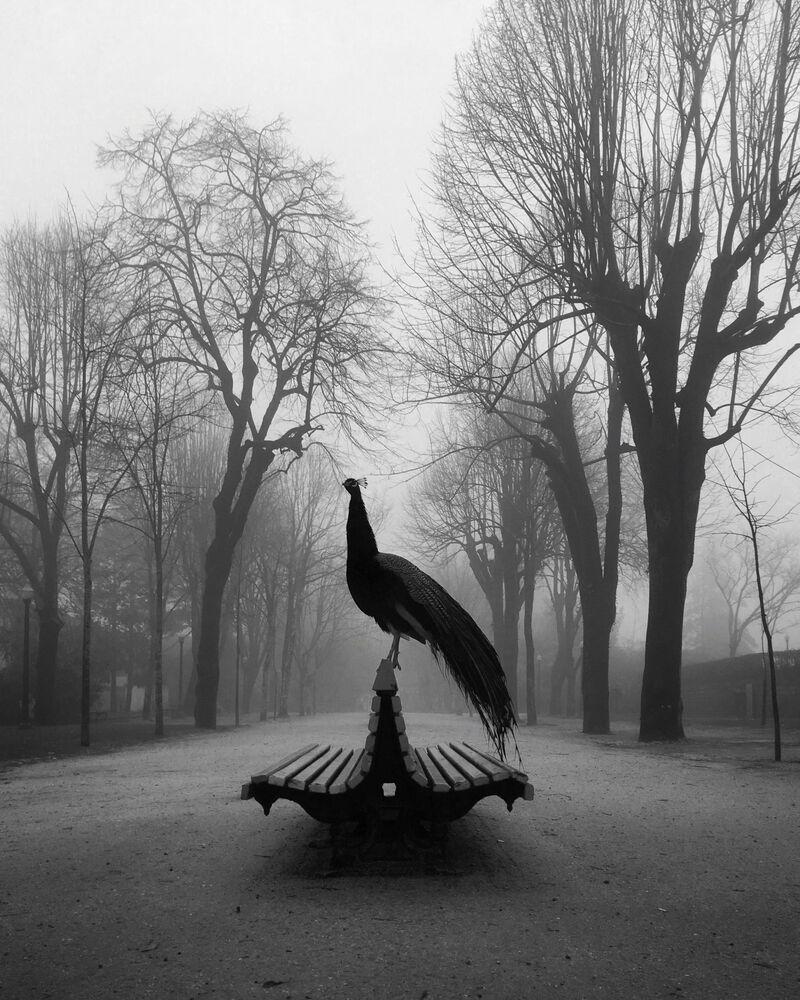 Hayvanlar kategorisinde birinciliğe layık görülen Diogo Lage'nin fotoğrafı.